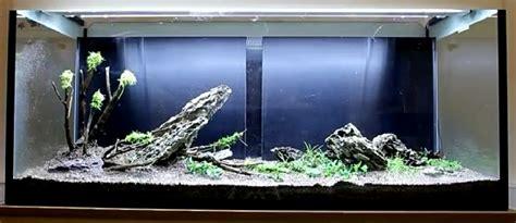 Pinset Untuk Aquascape cara membuat aquascape m a l