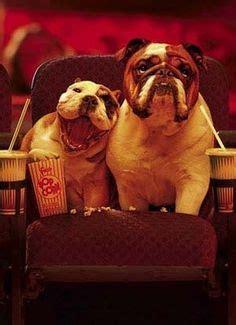 can pugs eat popcorn grumpy grumpy pup on grumpy bulldogs and pugs