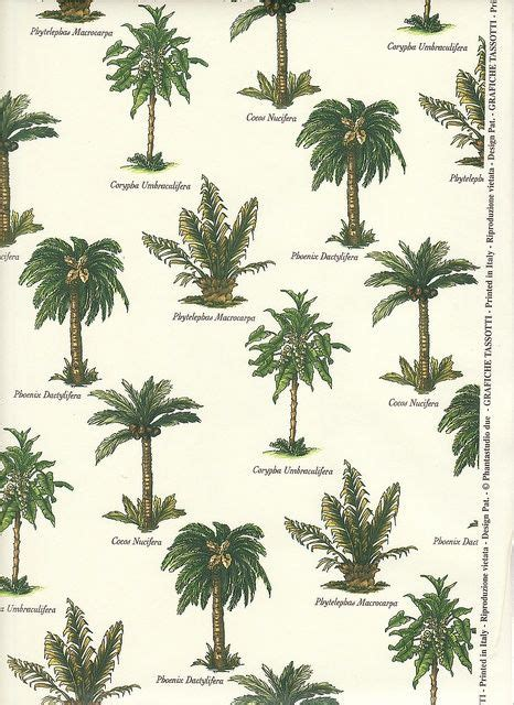type of tree types of palms palm tree varieties butterfly