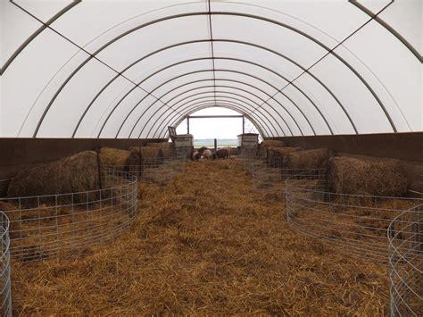 Hoop Sheds farrowing in hoop building in january curiousfarmer
