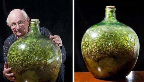 garden in a bottle this bottle garden hasn 180 t been watered in over 40 years and is thriving