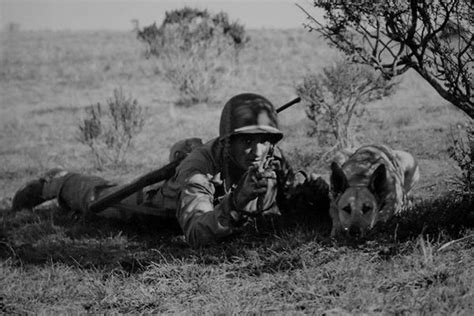 war dogs world war ii in pictures dogs of world war ii