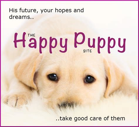 happy puppies website 4 to play with your labrador the labrador site