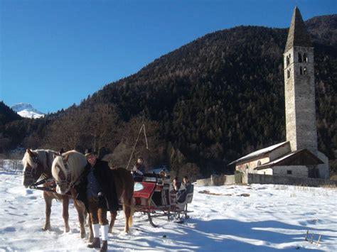 cavalli con carrozza passeggiate in carrozza trainata da cavalli