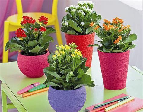 zimmerpflanzen schlafzimmer pflegeleichte zimmerpflanzen im schlafzimmer sorgen f 252 r