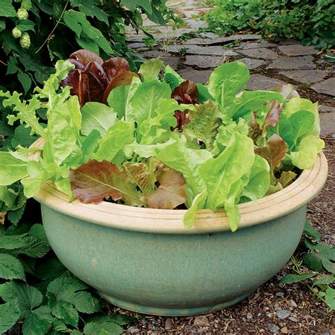 Container Gardening Growing Vegetables In Urban Planters Potted Vegetable Garden