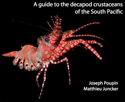 coral reef crustaceans from sea to papua books guide to decapod crustaceans of the south pacific is a