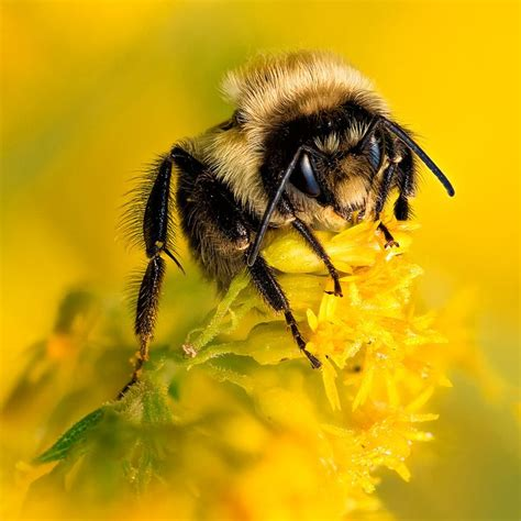 Bee And Vee Big 7 Owl 17 best images about bees on bumble bees save