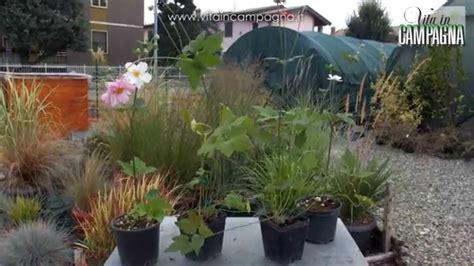 piante autunnali fiorite coltivazione delle piante perenni autunnali viyoutube