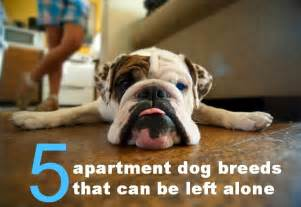 Dog that don t bark all the time an adult dog 5 apartment dog breeds