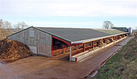 The Beef Shed by Photos Farmer Houses Beef Cattle In Poultry Sheds