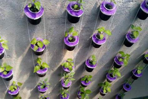 Rak Vertikultur panduan dan tips mudah menanam cabai vertikultur