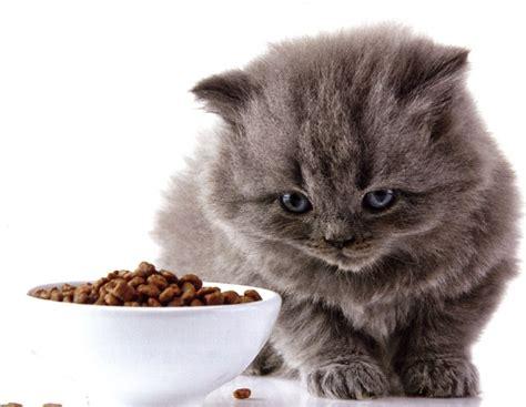 alimentazione naturale gatto manuale di alimentazione naturale per gatti d fiedler