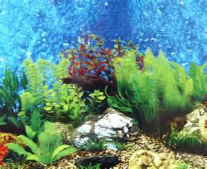 Aqua Vista 500 aquarium backgrounds