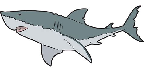 clipart shark shark clipart black and white clipart panda free