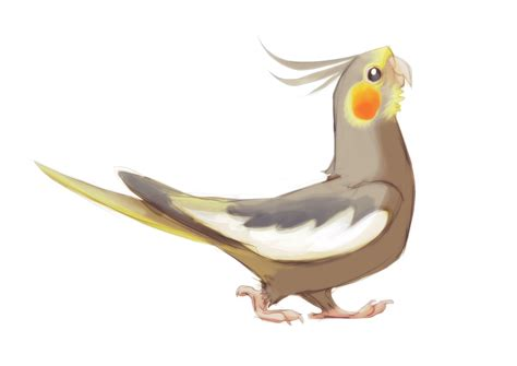 Standard Cockatiel By Tasteslikeanya On Deviantart