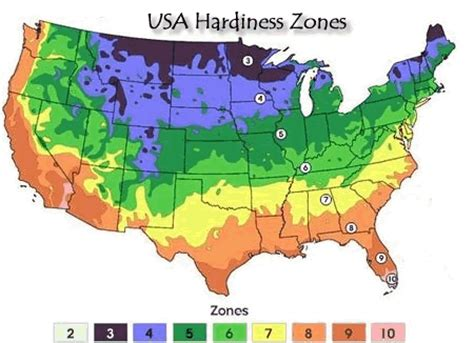 Landscape Zones Usa All About Caladiums Hardiness Zones