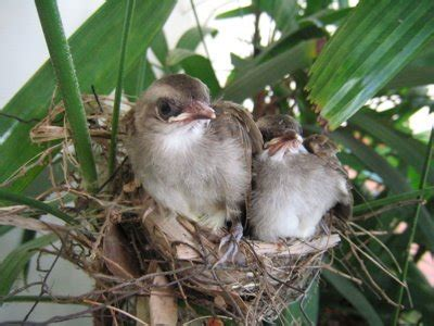 komunitas pecinta burung trucukan juli 2014