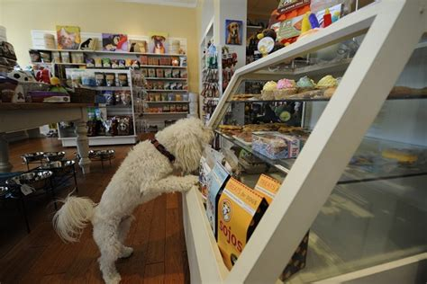 puppy stores in va high end pet store seeking new spaces in dc