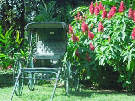 Caguas Botanical Garden Jardin Prehistorico Picture Of Caguas Botanical Garden William Miranda Marin Caguas Tripadvisor