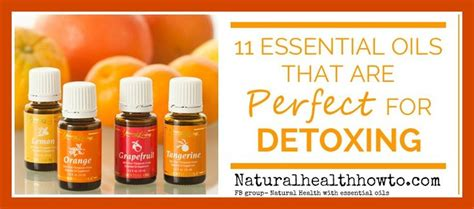 Blood Purifier Detox Drops by 17 Best Ideas About Living Detox On