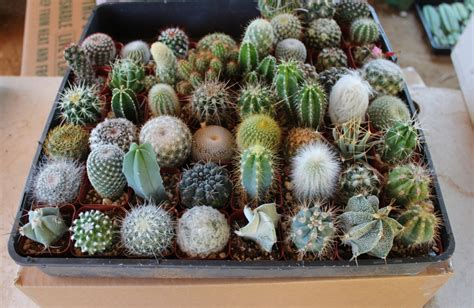 succulent containers for sale 10 very cool cactus in 2 plastic containers great for