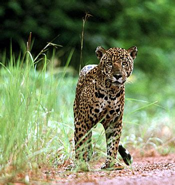 Animal Roller Date St image st bargain mammal jpg animals wiki fandom