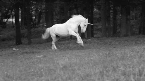 libro farewell to the horses unicorn gif gif find share on giphy