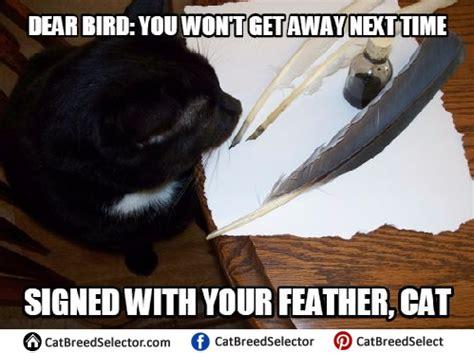 Best Cat Memes - activity kingskrall