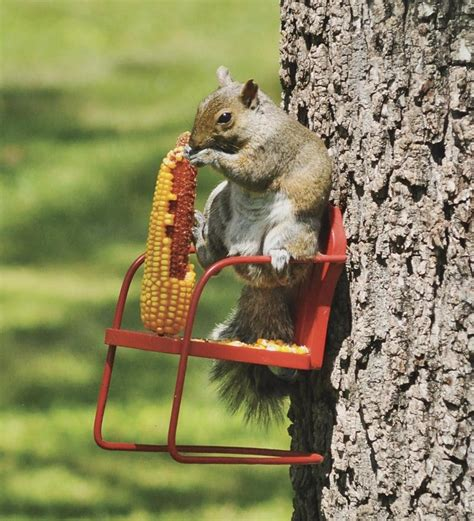 red retro lawn chair squirrel feeder bird squirrel feeders