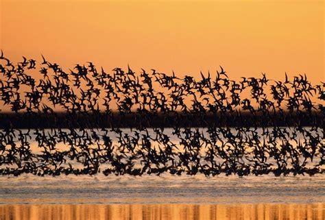 como se le llama al conjunto de poetas mejor conjunto de frases como se llama un conjunto de aves