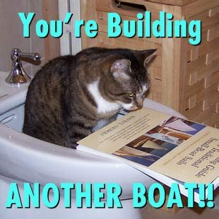 Cat Meme Boat - benders quot what the quot picture thread page 520