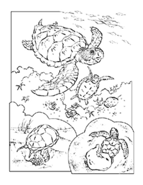 turtle eggs coloring page sea turtle eggs printable coloring pages
