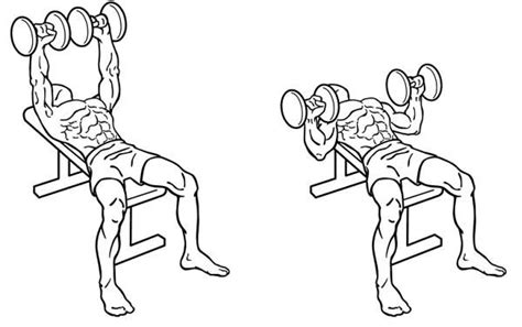 dumbbell bench press exercise how you can build a strong chest 2 workouts included