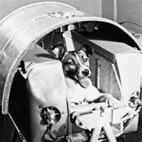 laika the space the story of laika the in space