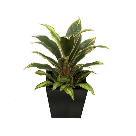 Pot Plastik Coklat 18 Cm Green Leaf dracena varigated plant 60cm with decorative fibreglass