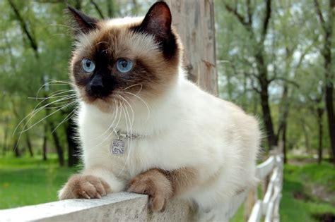 cibo per gatti fatto in casa cibo per gatti fatto in casa non sprecare