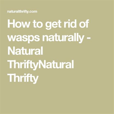 How To Get Rid Of Wasps In Backyard by 1000 Ideas About Get Rid Of Wasps On Wasp