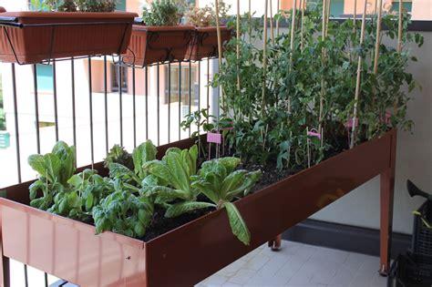 tavolo orto tavolo da orto sul balcone giugno erbaviola