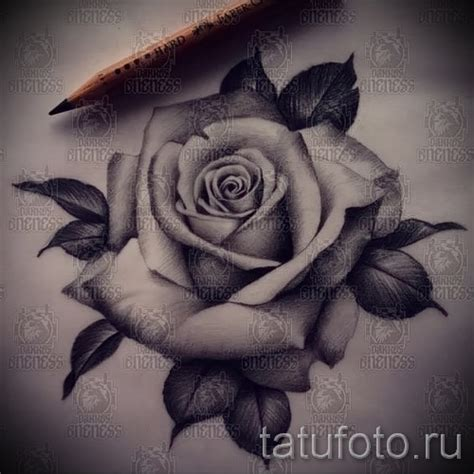 тату розы черно белые эскизы 7 tatufoto com