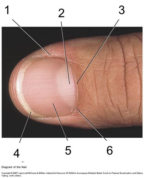 toenail lifting from nail bed toenail lifting off nail bed pictures photos