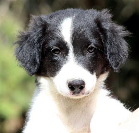 siti di in vendita siti annunci animali in vendita
