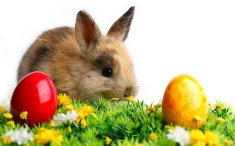 easter bunny happy easter bunny wallpaper wallpup