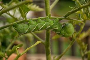 insects and plant diseases signs of plant pests photos of insects and diseases
