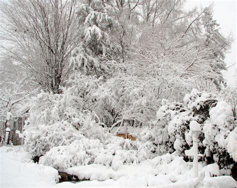 the garden in winter winter habitat in our wildlife garden 1 our habitat garden