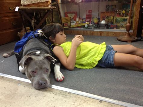 how to your pitbull to be a service bully pitbull service breeds picture