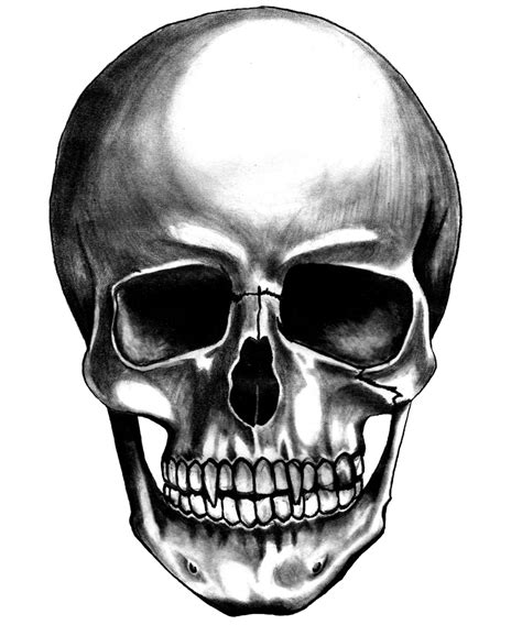 skull images skull png images the symbol of png only