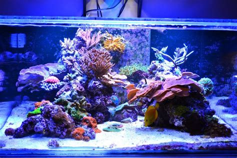 Saltwater Aquascape by Tips And Tricks On Creating Amazing Aquascapes Page 31