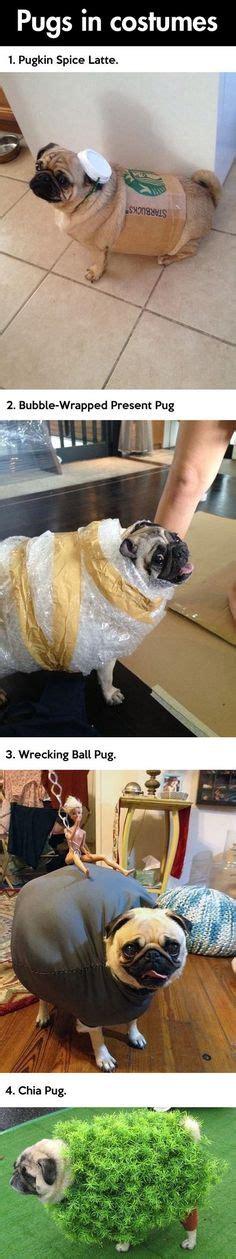 pug wrecking pugs in costume on pug costume pug meme and white pug