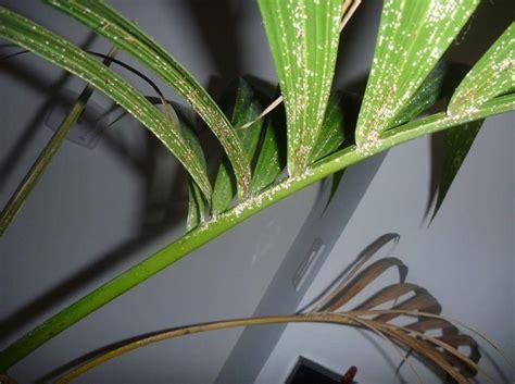 piante verdi d appartamento piante verdi da appartamento piante appartamento come